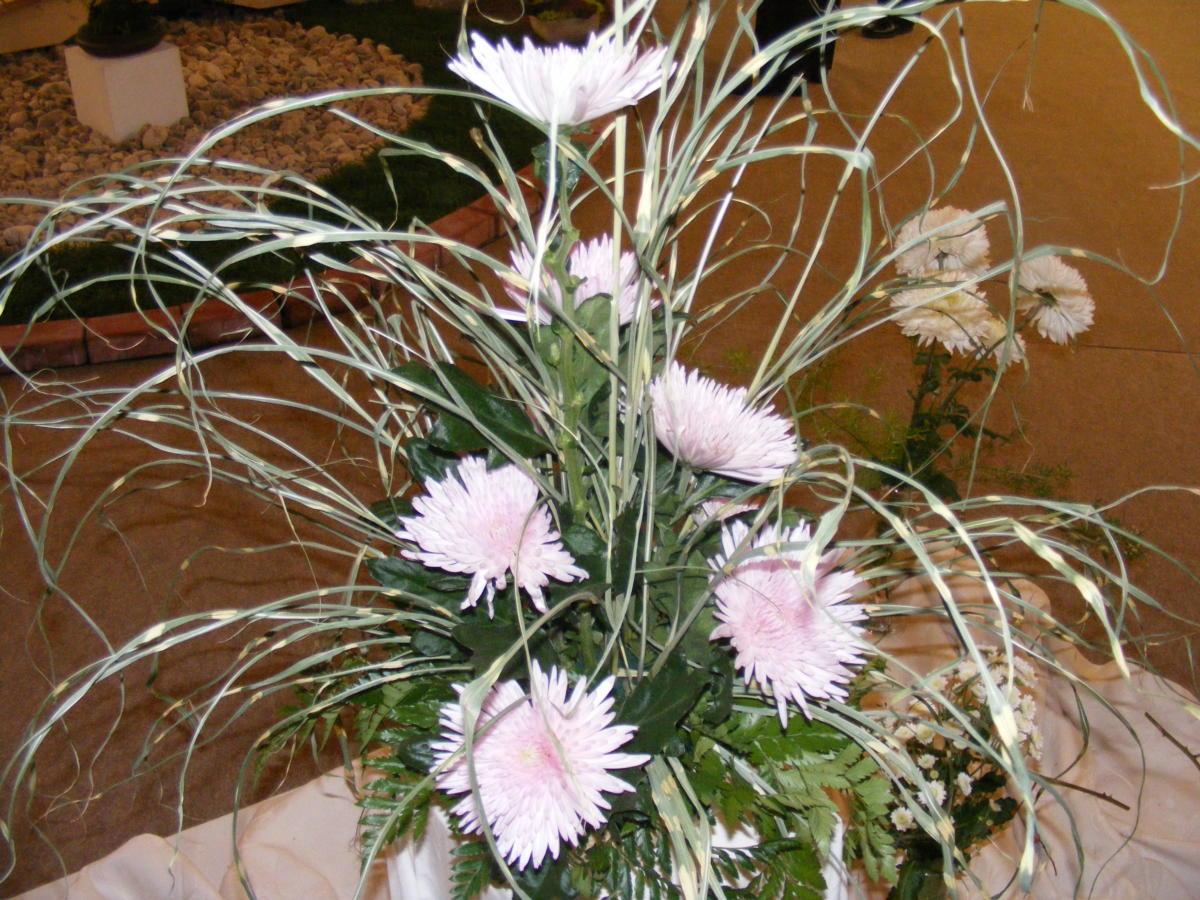 Chryzantéma - květina barevných nálad
