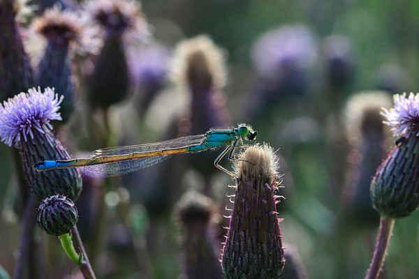 Na následujících snímcích barevná fantazie z luční trávy.