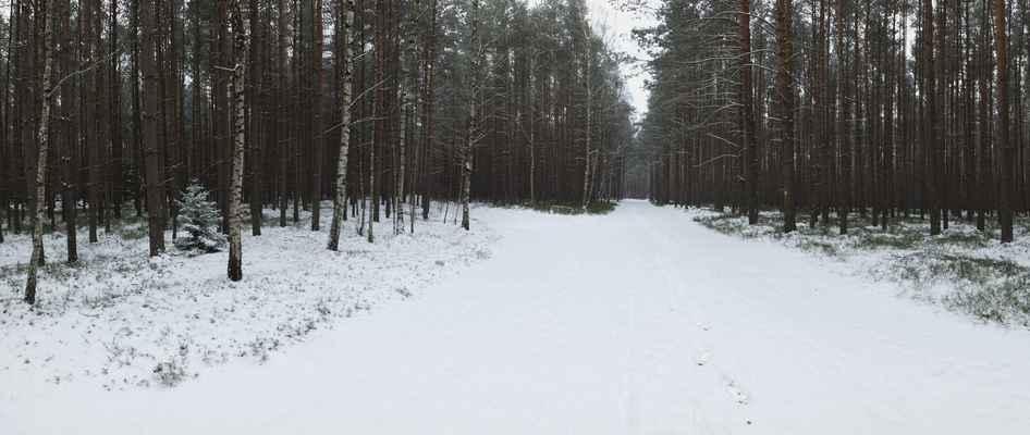cesta z bezdězu do doks nepatří k nejpůvabnějším. borovice, sem tam bříza a písek posypaný sněhem...
