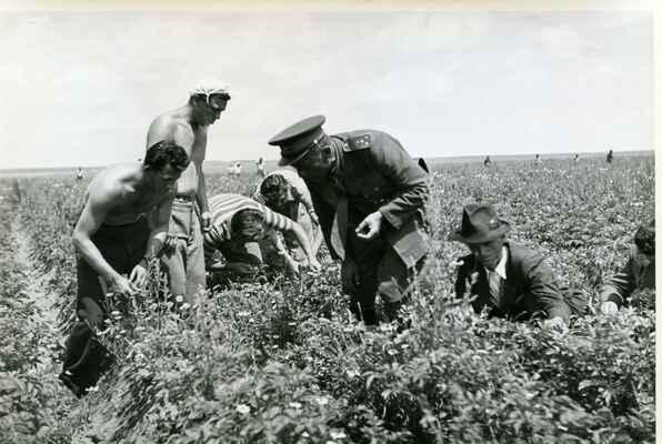 Hledání mandelinky bramborové - Sbírka RMaG v Jičíně