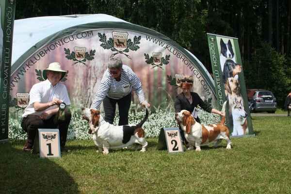 Klubová výstava neděle 5.6.2016 - třída pracovní psi v1, CAC Zvezdochet Canis Haund, v2 r.CAC Calvin Klein Bohemia Horrido